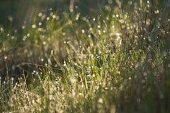 De lentegras Stock Afbeeldingen