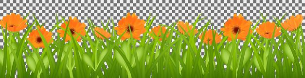 De lentegras en oranje bloemen van calendula, Pasen-achtergrond, decoratieelement, aard royalty-vrije illustratie
