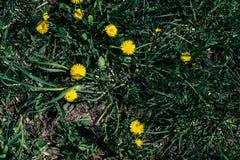 De lentegras met bloemen royalty-vrije stock afbeeldingen
