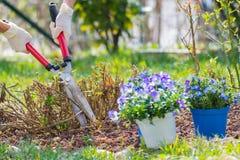 De lentehuis die, en bloemen in orde maken planten tuinieren Stock Foto