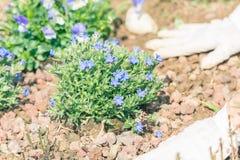 De lentehuis tuinieren, die bloemen in grond planten Stock Foto's