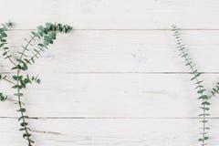 De lenteinstallatie over witte houten achtergrond Stock Foto's