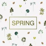 De lentekaart met verschillend bladeren en gras Royalty-vrije Stock Afbeelding