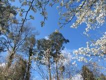 De lentekaders Stock Afbeeldingen