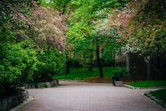 De lentekleuren en een gang bij Ryerson-Universiteit, in Toronto, O Royalty-vrije Stock Foto