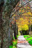 De lentekleuren in Grotere Moncton, New Brunswick, Canada royalty-vrije stock afbeelding