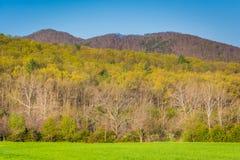 De lentekleuren op bomen in de landelijke Shenandoah-Vallei van Virgini Stock Foto's