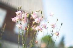 De lenteklokjes in het hout Royalty-vrije Stock Afbeelding