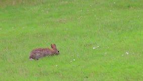 De lentekonijn in gazon stock footage