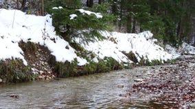 De lentekreek die bij het bos met smeltende sneeuw stromen stock video