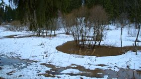 De lentekreken in het bos stock videobeelden
