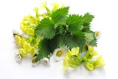 De lentekruiden Royalty-vrije Stock Foto