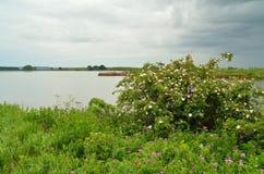 De lentelandschap stock afbeelding