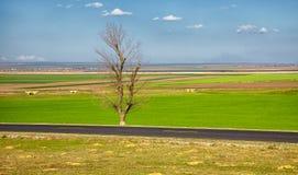 De lentelandschap dichtbij Baia Royalty-vrije Stock Foto's