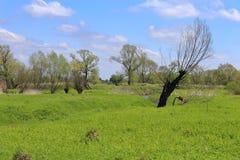 De lentelandschap - eenzame boom, weide en blauwe hemel Royalty-vrije Stock Foto