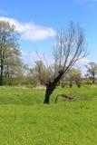 De lentelandschap - eenzame boom, weide en blauwe hemel Royalty-vrije Stock Afbeelding