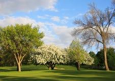 De lentelandschap met bloeiende bomen Royalty-vrije Stock Foto
