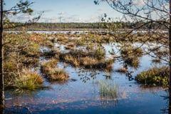 De lentelandschap met bomen en smeltingswater op de kust van een meer De lentehoogwater Royalty-vrije Stock Afbeelding