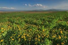 De lentelandschap met gele paardebloemenbloem Royalty-vrije Stock Afbeelding