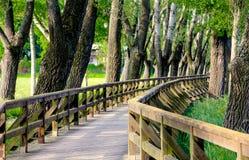 De lentelandschap met houten brug Stock Foto's