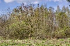 De lentelandschap met struiken en bomen stock afbeelding