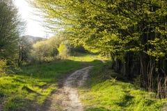 De lentelandschap met voetpad in groen gras dichtbij mistig bos stock afbeeldingen