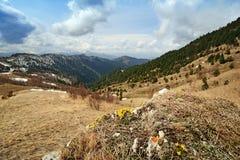 De lentelandschap van de bergen van de Kaukasus met pieken door bos worden behandeld dat Stock Afbeeldingen