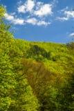 De lentelandschap van het Uitlopersbrede rijweg met mooi aangelegd landschap Royalty-vrije Stock Foto