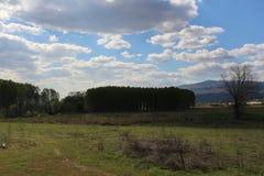 De lentelandschap van Muletarov, Bulgarije Stock Foto's