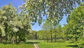 De lentelandschap van stadspark met bloeiende appelbomen Royalty-vrije Stock Afbeeldingen