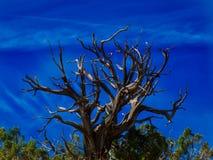 De lentelicht op Gray Lifeless Tree stock foto's