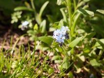 De lentelicht op Klein Blauw Hoofd van Bloem Stock Foto's