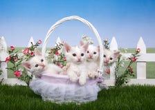 De lentemand met vier witte katjes in een bloemtuin Stock Fotografie