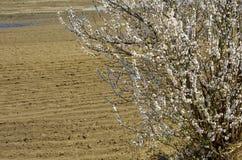 De lentemening in het platteland stock afbeelding