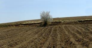 De lentemening in het platteland stock foto