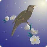 De lentenacht met Nachtegaal Royalty-vrije Stock Fotografie
