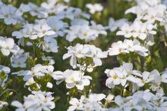 De lenteochtend en witte bloemen royalty-vrije stock foto