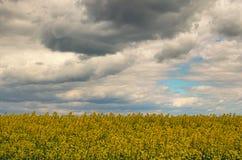 De lenteonweerswolken boven raapzaadgebied Verkrachtingsbloemen die in de lente bloeien Landschap in de lente bewolkte dag Stock Foto's