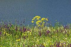 De lenteovervloed van kleuren Royalty-vrije Stock Fotografie