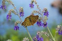 De lenteovervloed van kleuren Royalty-vrije Stock Foto's