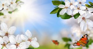 De lenteparadijs Royalty-vrije Stock Foto