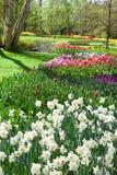 De lentepark in Keukenhof Stock Afbeeldingen