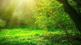 De lentepark met groene gras en bomen stock foto