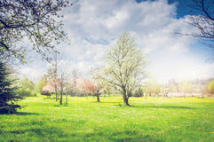 De lentepark of tuin met bloeiende fruitbomen, groene gazon en hemel Royalty-vrije Stock Fotografie