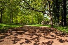 De lenteplatteland met silhouetten van de bomen Royalty-vrije Stock Afbeelding