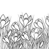 De lenteprentbriefkaar met witte krokus en zwarte slag De vroege Krokus van de de lentebloem voor Pasen op witte achtergrond Vect royalty-vrije illustratie