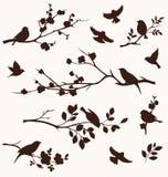 De lentereeks vogel en takjessilhouetten Bloementakken met vogels Royalty-vrije Stock Afbeelding
