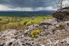 De lenteregen Stock Afbeelding