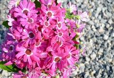De lenteregen op bloemen Stock Foto's