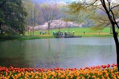 De lenteregen, tulpenbloesems in volledige bloei tegelijkertijd, als bezoekers royalty-vrije stock fotografie